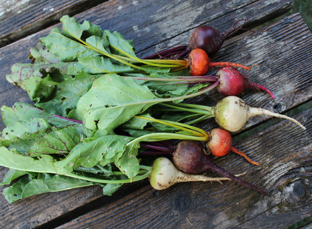 The Beat on Colorful Beets