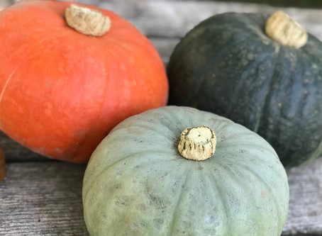 Winter Squash (Part I): An Introduction to the Sweetest Vegetable