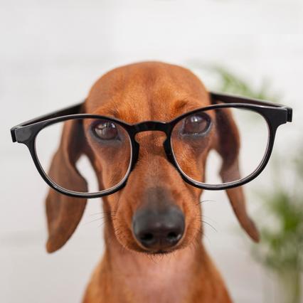 Собаки могут распознать ложь владельца