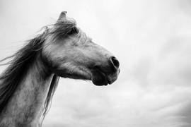shropshire equine photographer