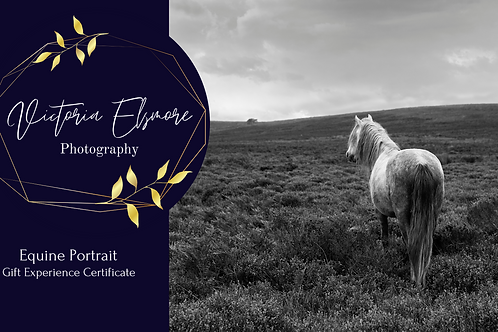 Equine Portrait Gift Experience