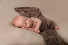 shrewsbury newborn photography