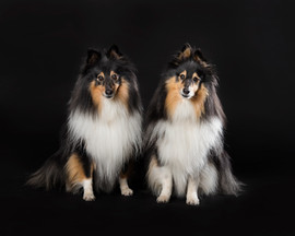shrewsbury dog photographer