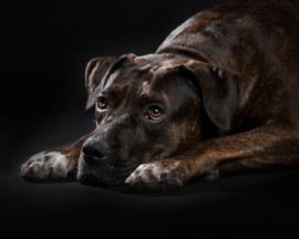 crossbreed dog photography