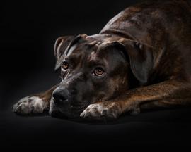 crossbreed dog photography