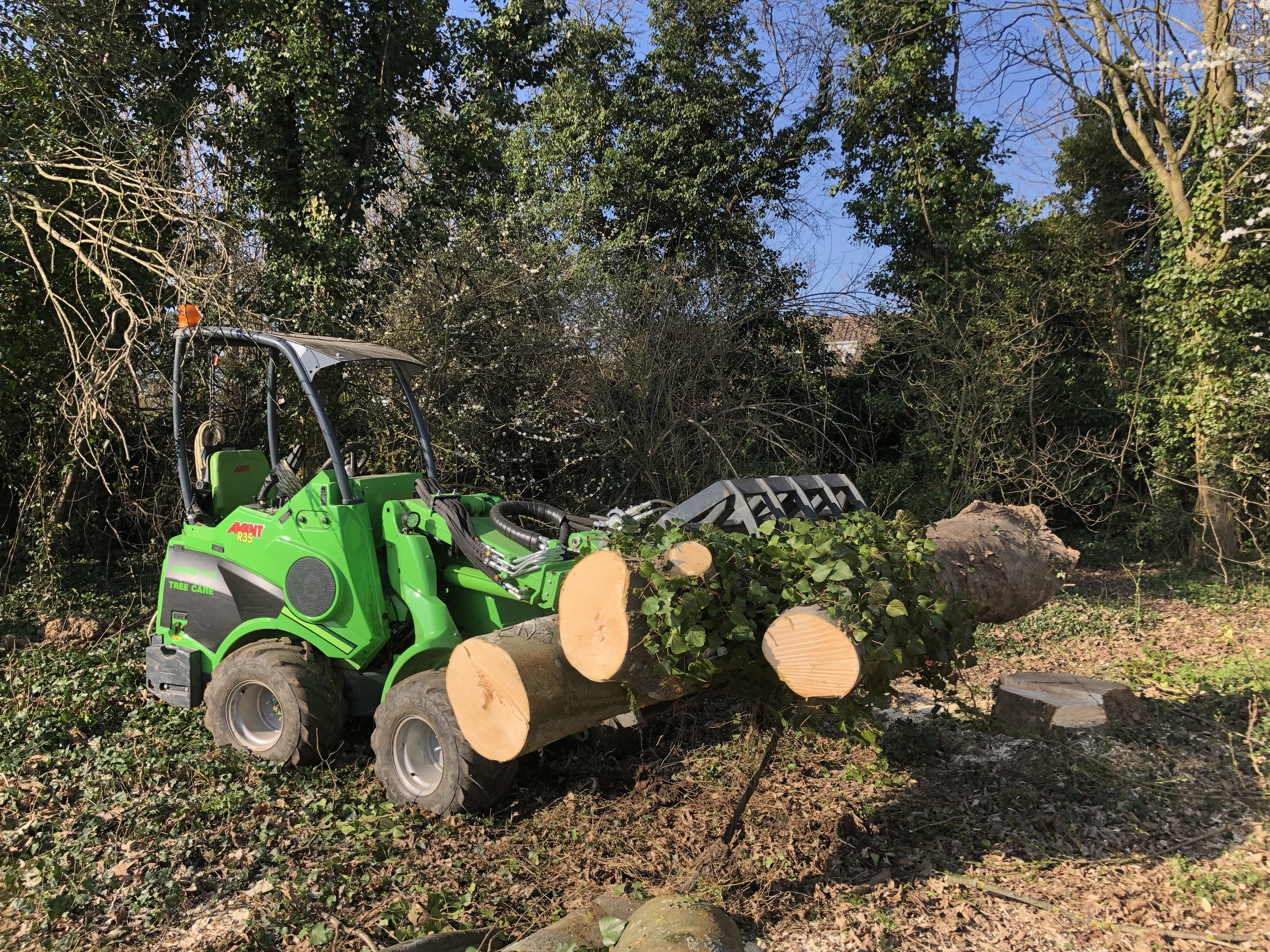 tree clearance works