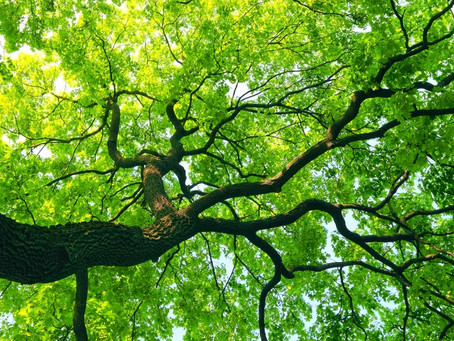 Tree Care and Maintenance tips to keep your trees healthy