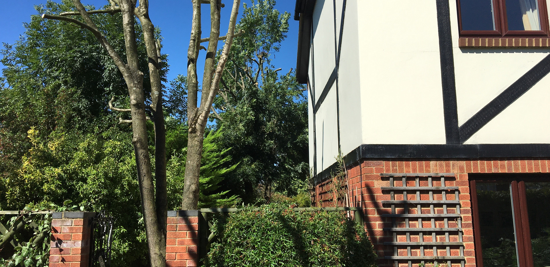 ash tree being pollarded by out tree care team in woodley