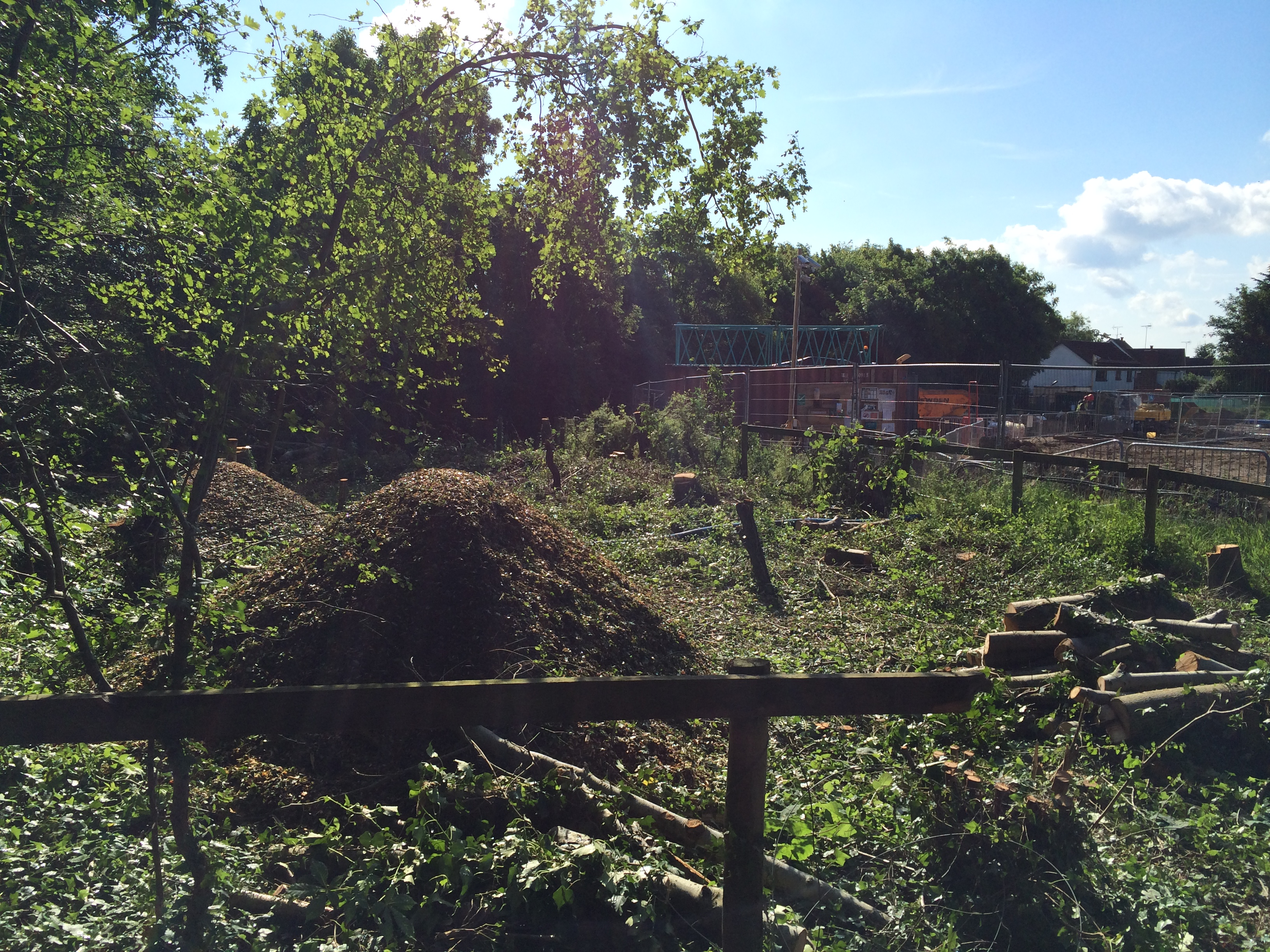commercial tree clearance