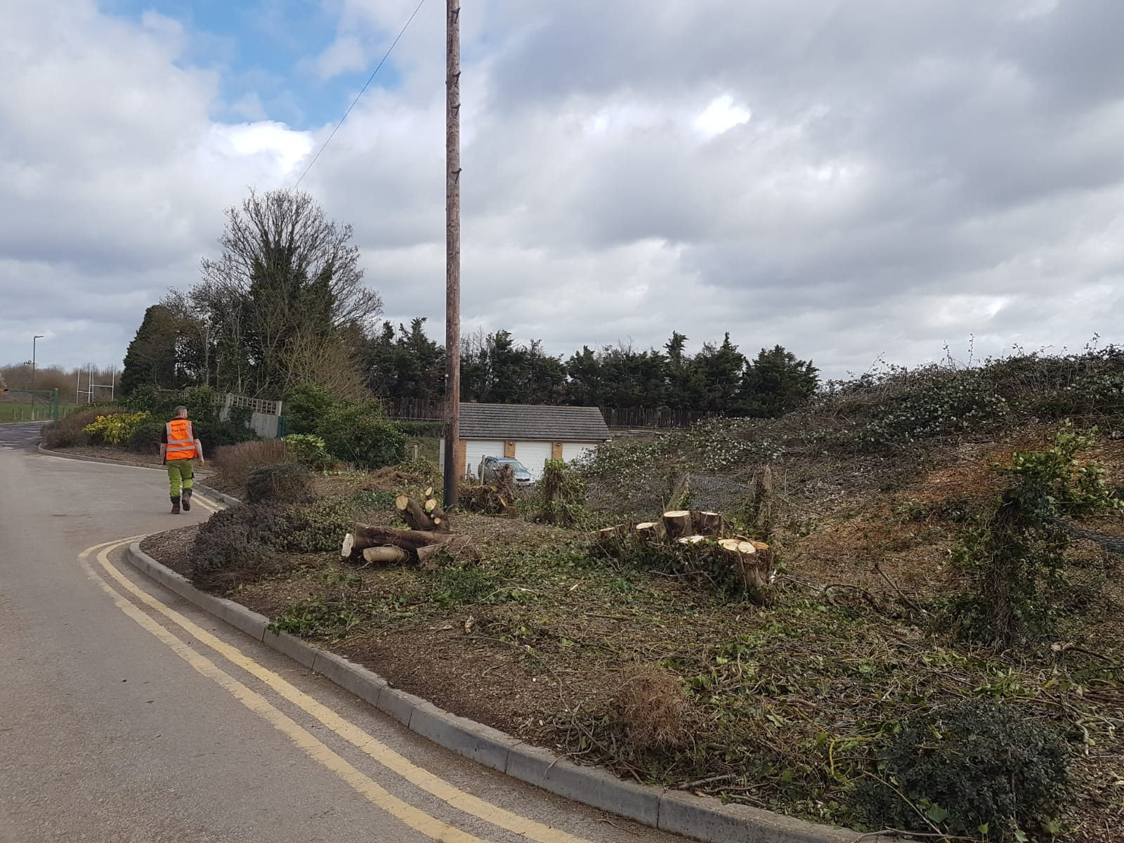 commercial tree felling