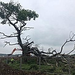 dangerous tree has been tree struck by l