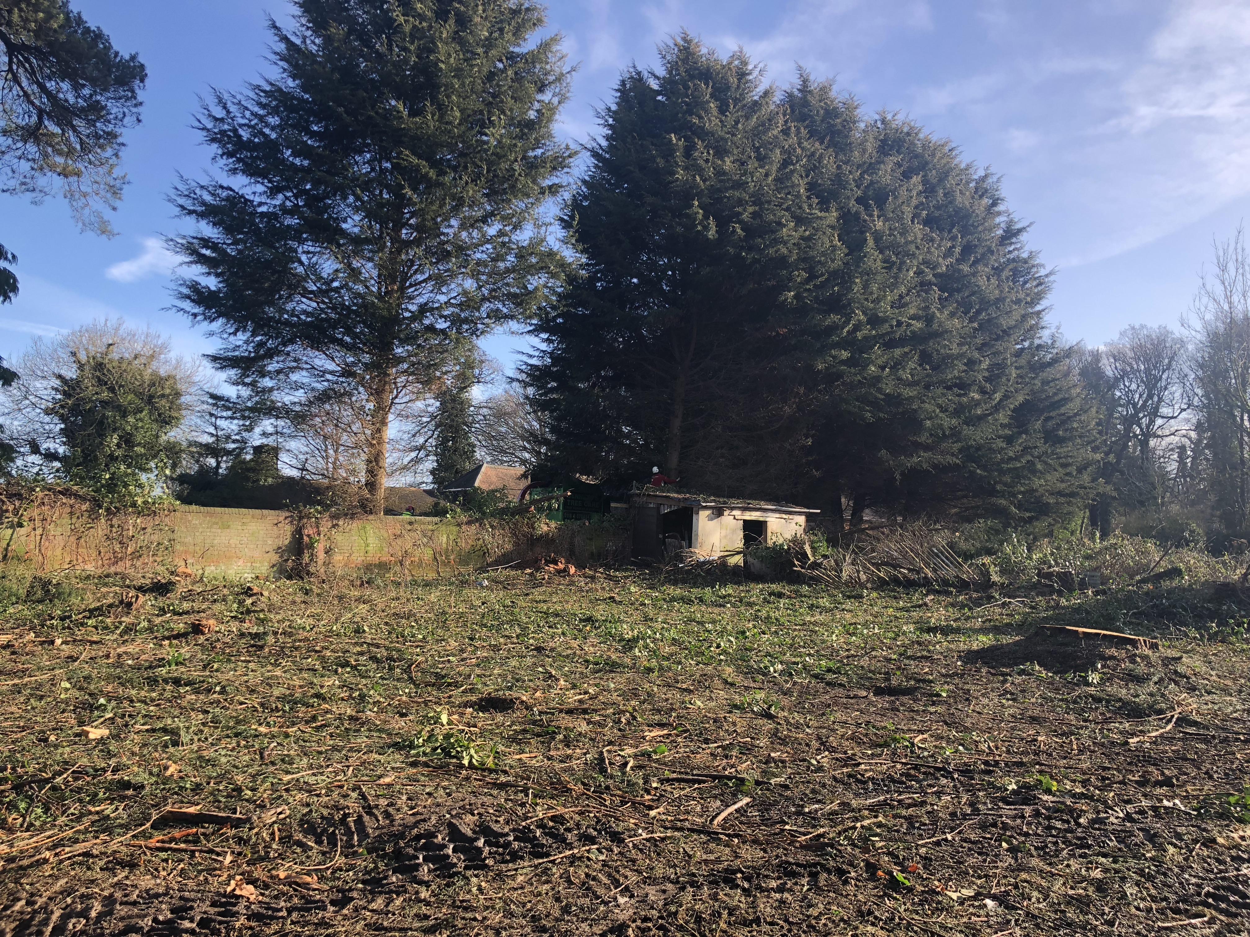 tree felling on site