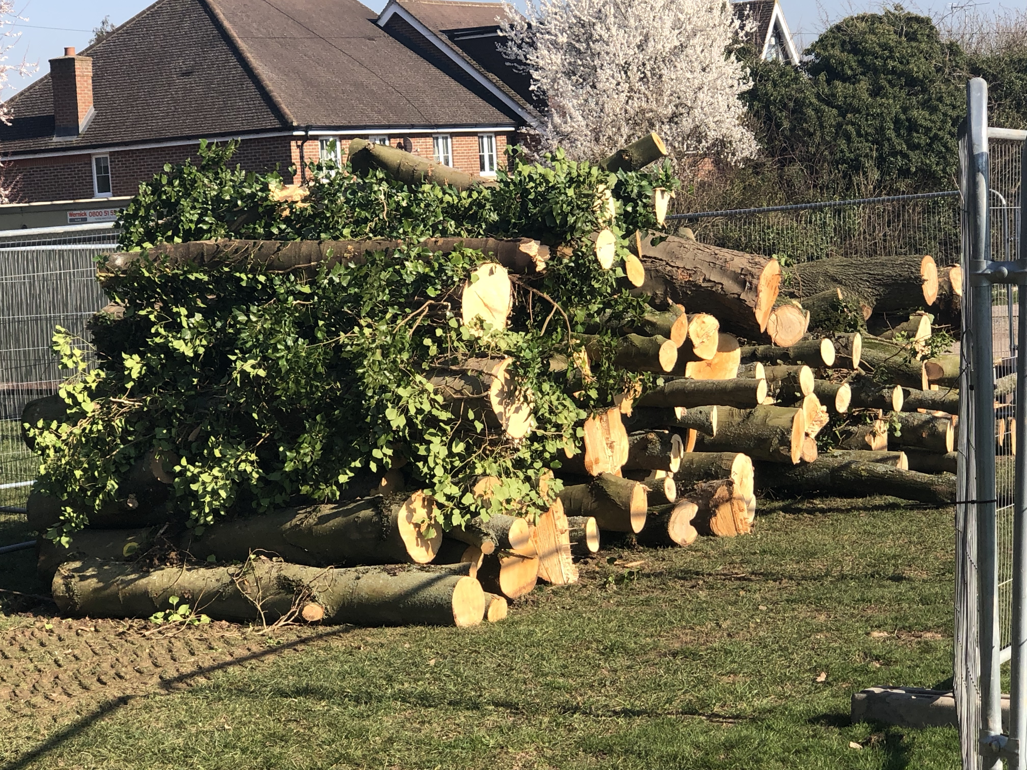 commercial tree clearing