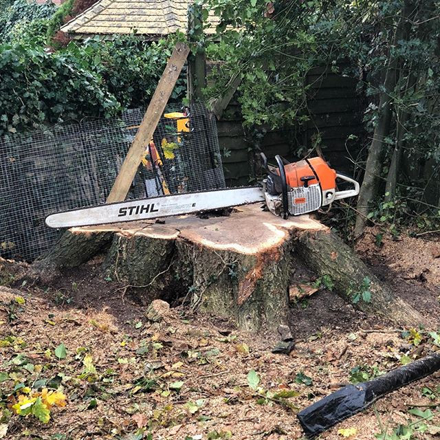 Oak stump removal with our p38x easy wor