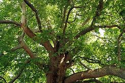protected tree tpo.jpg