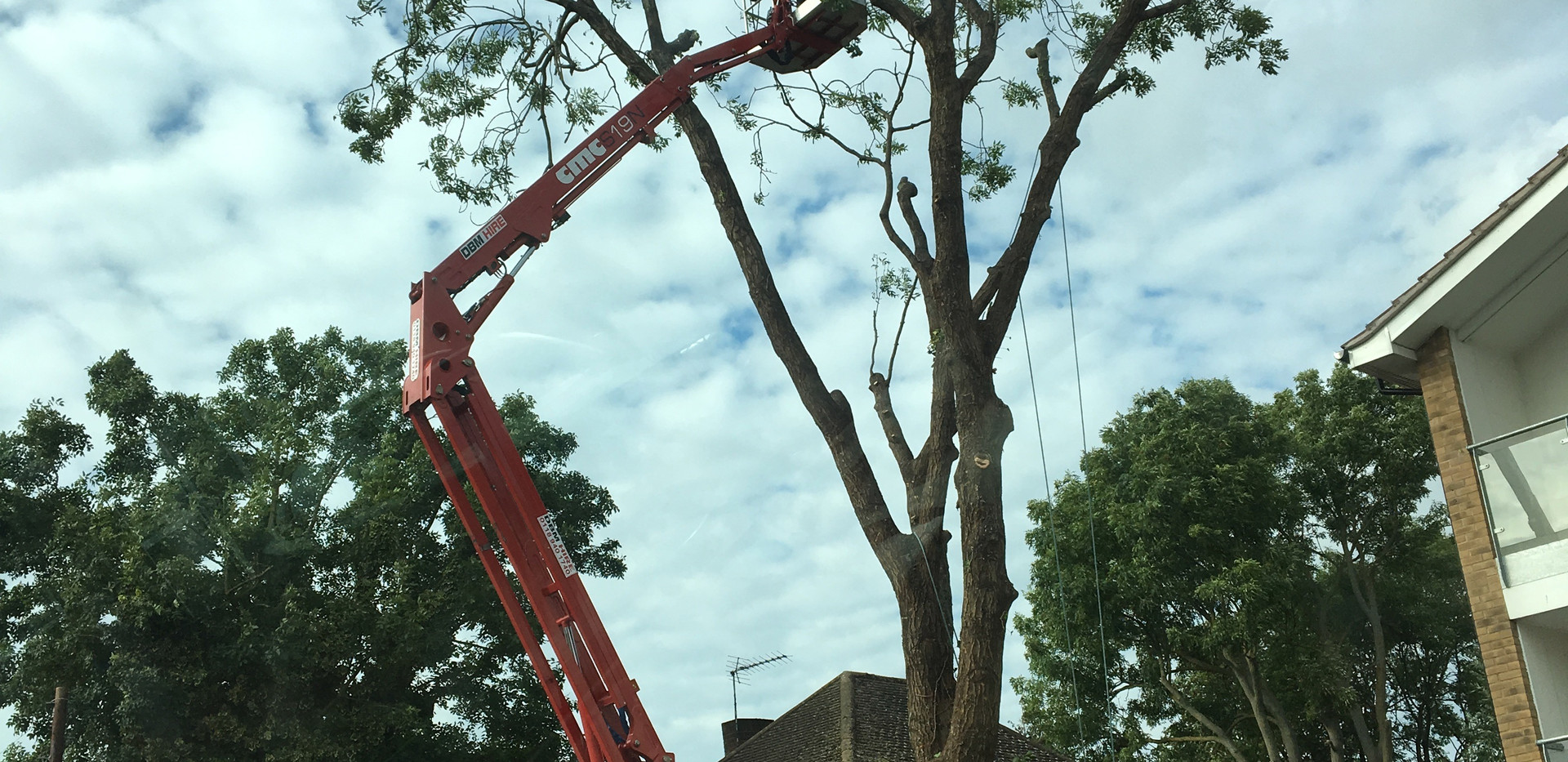 large ash tree being reduced in height kidlington