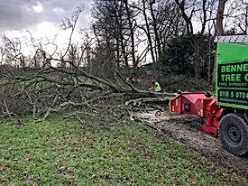 site tree clearance