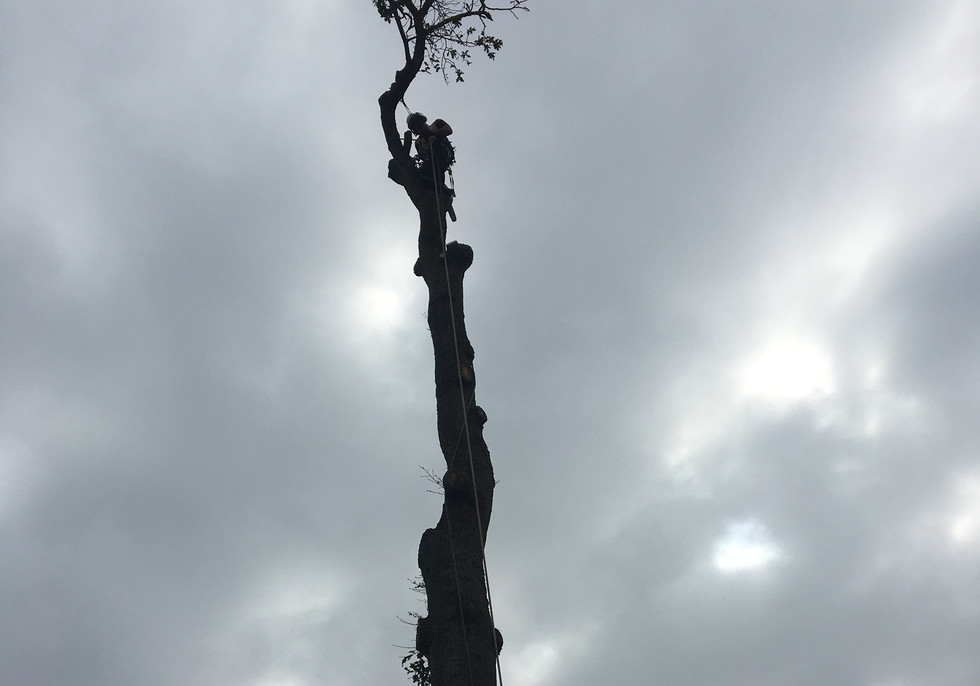 tree being removed was to large for garden
