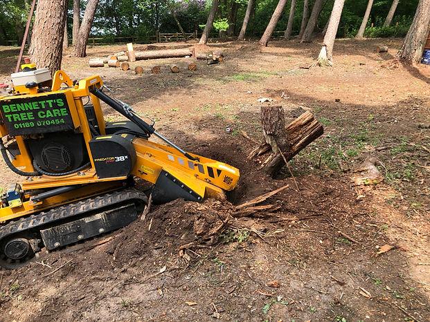 tree stump removal .jpg