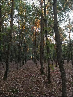 Bois forêts.
