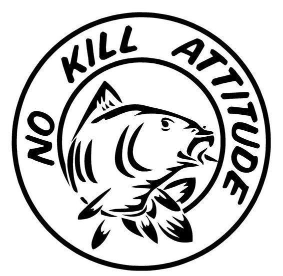 Peche No kill