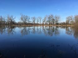 Vue sur l'étang du domaine