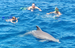A Dolphin at Les Saintes Guadeloupe