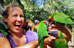 Lorikeets in Deshaies Guadeloupe