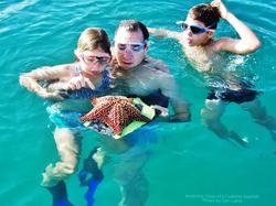 Anatomy of a Cushion Starfish