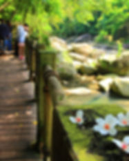 蓬萊溪.jpg