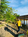 Riverwalk Cypress Planting 1.jpg