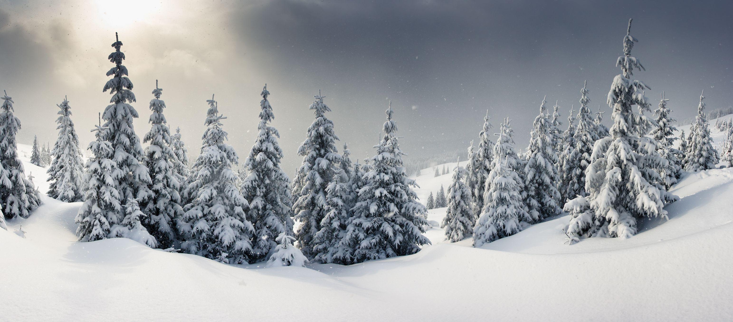 Paysage des Hautes Vosges