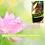 Thumbnail: Spring Attunement