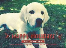 our english cream golden retriever puppy in Washington