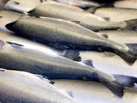 New report on the state of Fish for 2019 is out