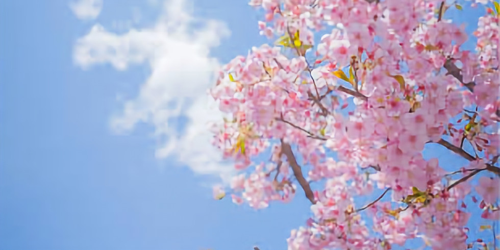 3 Day Spring Reset