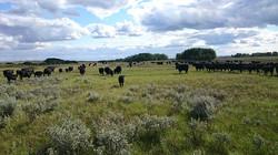 Hawkeye Ranch