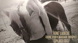 Equine sports massage therapy.jpg