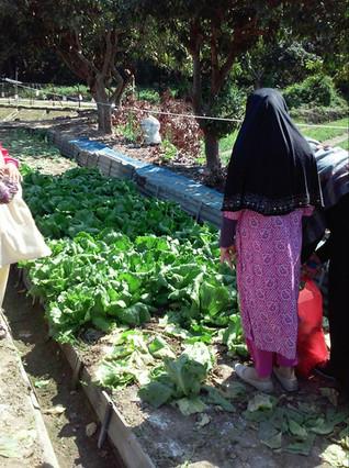 南亞裔家庭從觀塘駕車來買生菜