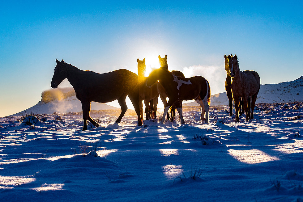 Navajo Wild Horses in Snow 2019 SWAIA.jp