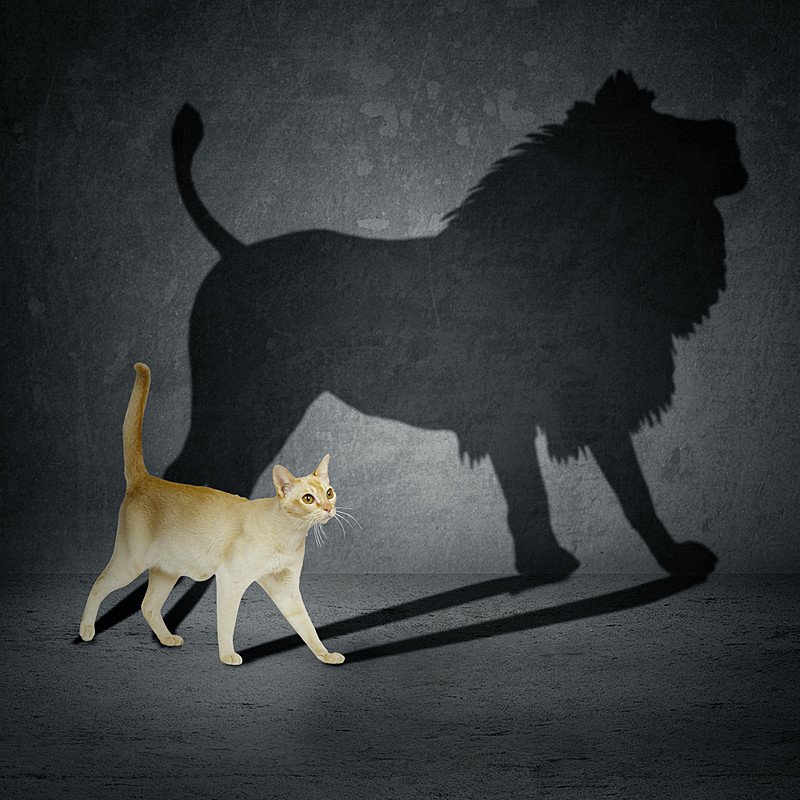 A cat with a lion's shadow, which symbolizes one's untapped potential