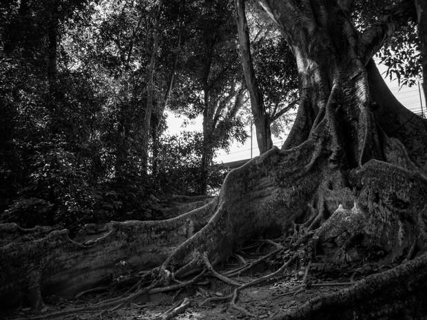 Um Arquiteto Entre a Natureza e a Cultura