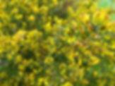 Flora silvestre