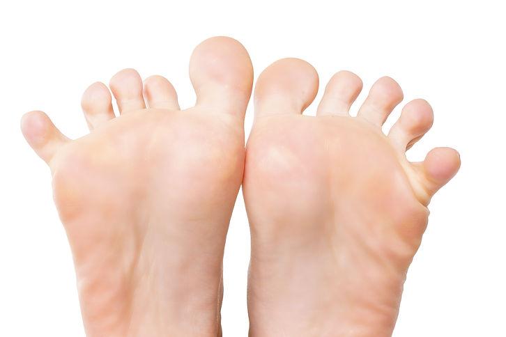 京都 整体 | 京都カイロプラクティック研究所(あんじゅ庵)足には何故5本も指があるのでしょう