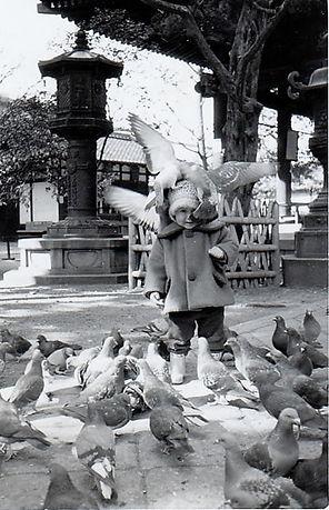 六角堂の鳩 三羽