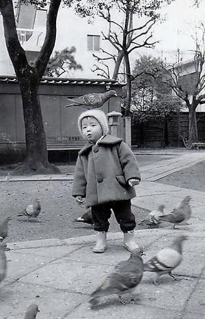 六角堂の鳩 一羽