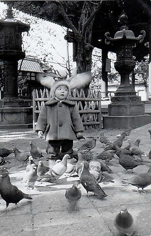 六角堂の鳩 二羽
