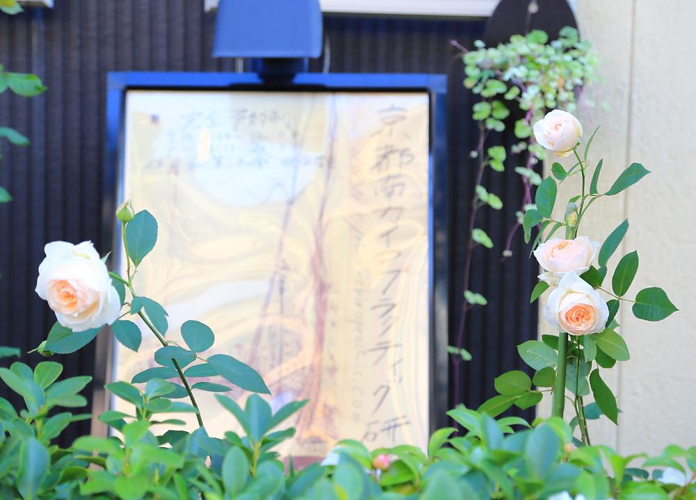 あんじゅ京都カイロプラクティック研究所看板前の秋バラ