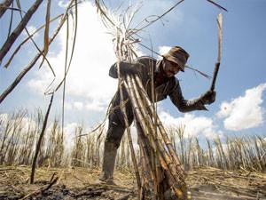 Com clima mais seco, safra de cana será 3% menor em 2021/22