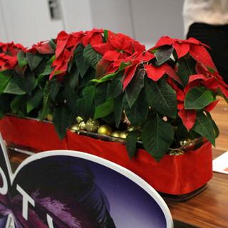 dekoracje świąteczne- gwiazda betlejemska